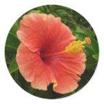 Orange Hibiscus Flower Tropical Floral Classic Round Sticker