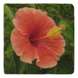 Orange Hibiscus Flower Tropical Floral Trivet