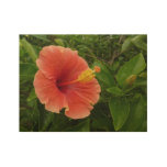 Orange Hibiscus Flower Tropical Floral Wood Poster