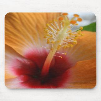 Orange Hibiscus Mouse pad