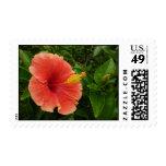 Orange Hibiscus Postage Stamps