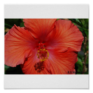 orange hibiscus print