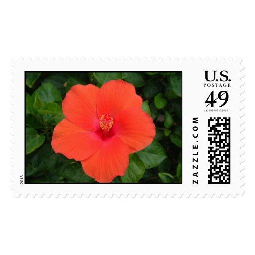 Orange Hibiscus Stamps