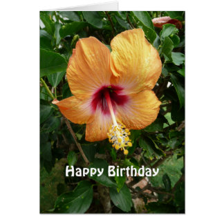 Orange Hibiscus Tropical Flower Birthday Template Cards