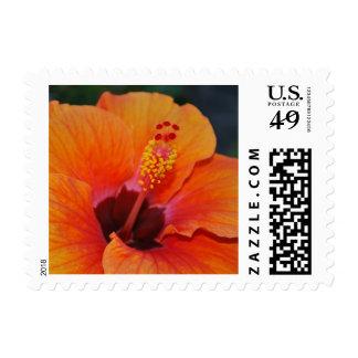 Orange Hibiscus Tropical Wedding Postage