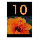 Orange Hibiscus Wedding Table Number Card