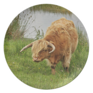 Orange Highland Cow Party Plate