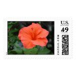 Orange in Bloom Postage Stamp