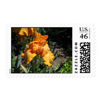 Orange Iris Stamp