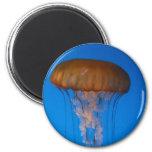 Orange Jellyfish Fridge Magnets