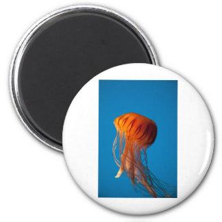 Orange Jellyfish Magnet