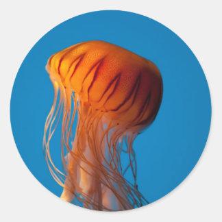 Orange Jellyfish Round Stickers
