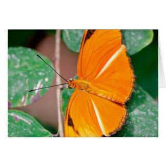 Orange Julia Butterfly Card