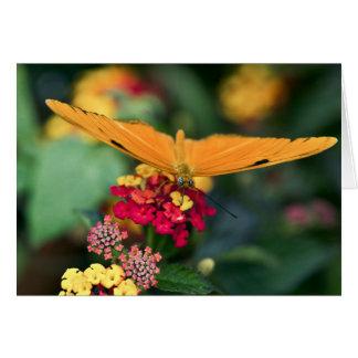 """""""Orange Julia Butterfly"""" Card"""