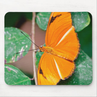 Orange Julia Butterfly Mouse Pad