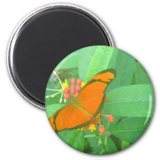 Orange Julia Tropical Butterfly Magnet