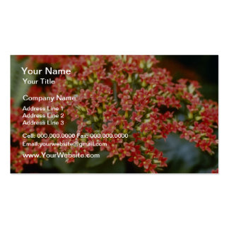 Orange Kalanchoe 'Anne-Marie' flowers Double-Sided Standard Business Cards (Pack Of 100)