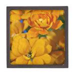 Orange kalanchoe flowers premium keepsake boxes