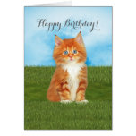 Orange Kitten Blue Eyes Birthday Card