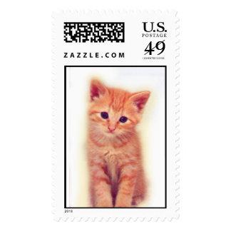 Orange Kitten Postage Stamps