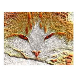 Orange Kitty Cat Postcard