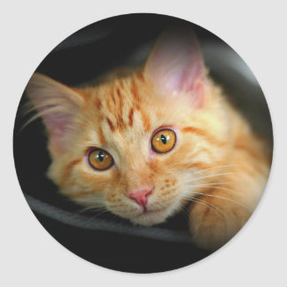 Orange kitty Sticker