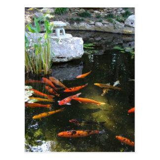 Orange Koi Postcard