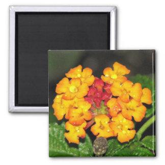 Orange Lantana Magnets