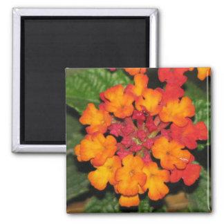 Orange Lantana Fridge Magnet