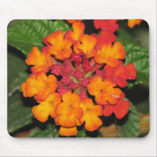 Orange Lantana Mouse Pad