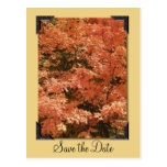 Orange Leaves Save the Date Postcard