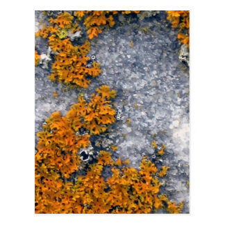 Orange lichen on granite postcard
