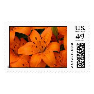 orange lilies stamp
