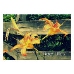 Orange Lilies Posters