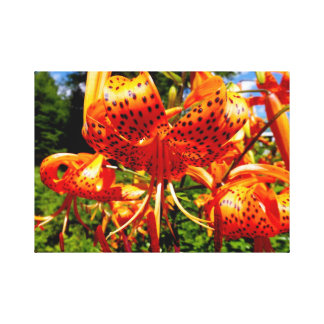 Orange Lilly Canvas Print