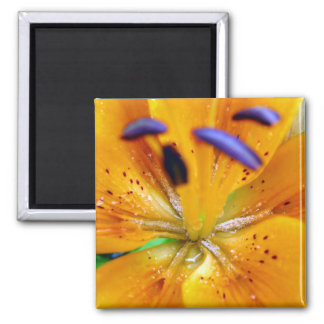 Orange Lilly Flower Close-up 2 Inch Square Magnet