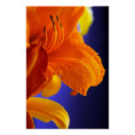 Orange Lily Bouquet Poster