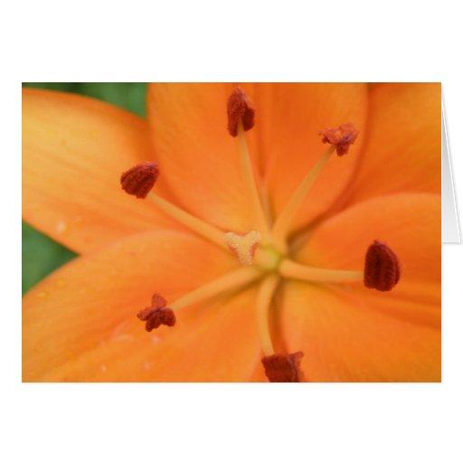 Orange Lily Floral Greeting Card