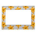 Orange Lily Flowers on Light Gray. Picture Frame Magnets