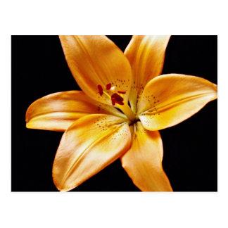 Orange lily flowers postcard