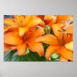 Orange Lily Flowers Poster