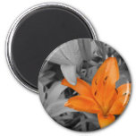 Orange Lily Hand-Colored Magnet
