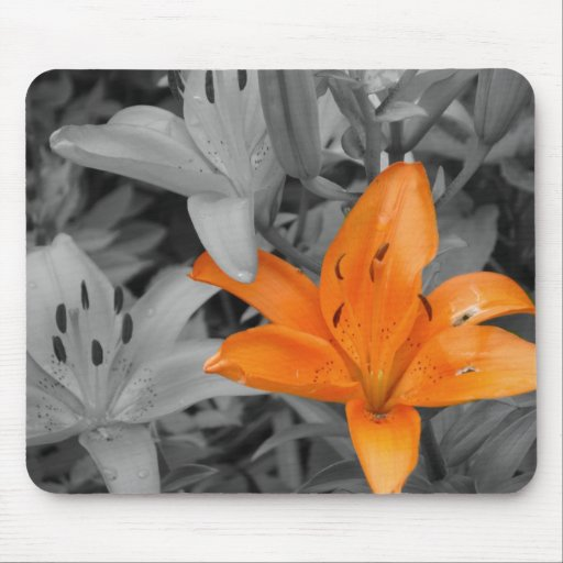 Orange Lily Hand-Colored Mousepad