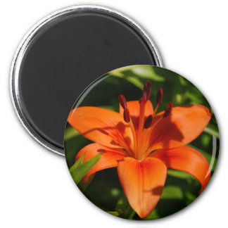 Orange Lily Magnet