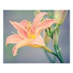 Orange Lily Photo Print 10x8