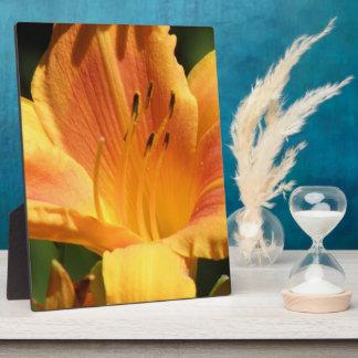 Orange Lily  Plaques