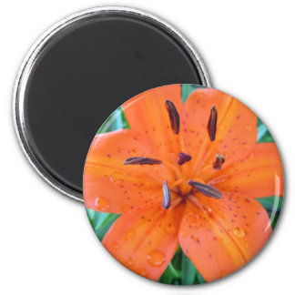 Orange Lily with Water Droplets Magnet