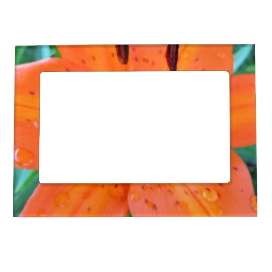 Orange Lily with Water Droplets Magnetic Photo Frame