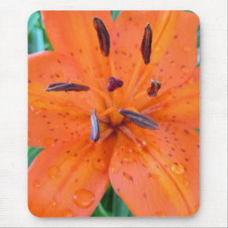 Orange Lily with Water Droplets Mouse Pad