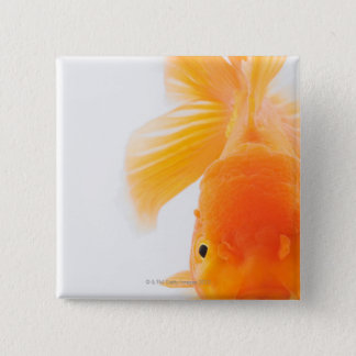 Orange lionhead goldfish (Carassius auratus) Button